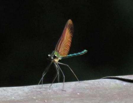 清水山の昆虫 121