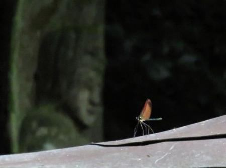 清水山の昆虫 131