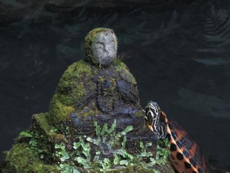 清水山の昆虫 108