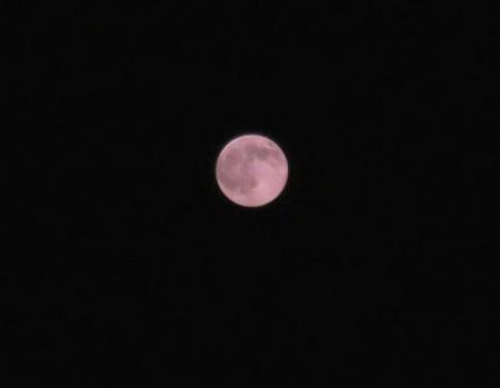 満月と昆虫 004