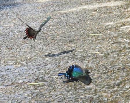 蝶の死骸あり 207