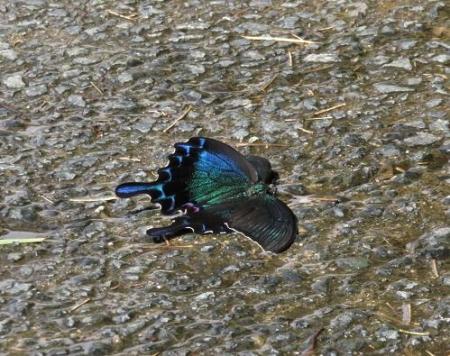 蝶の死骸あり 201