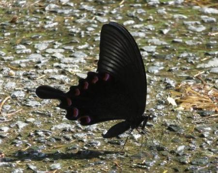 蝶の死骸あり 198
