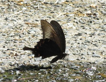 蝶の死骸あり 197