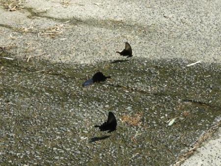 蝶の死骸あり 191