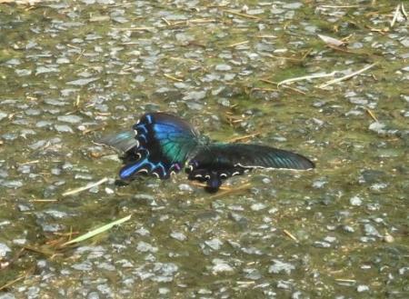 蝶の死骸あり 220