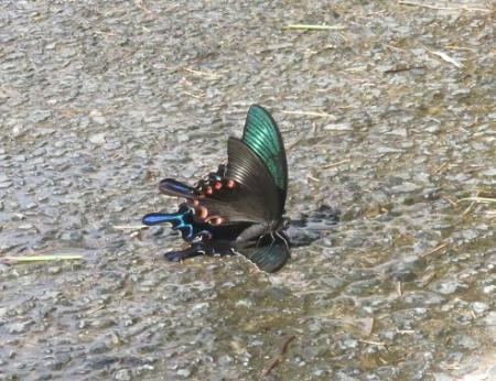 蝶の死骸あり 209