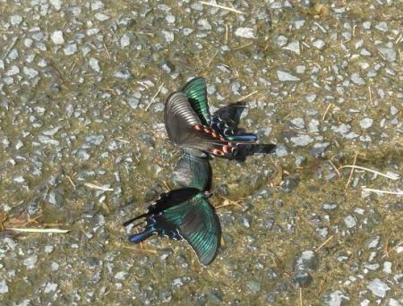 蝶の死骸あり 241