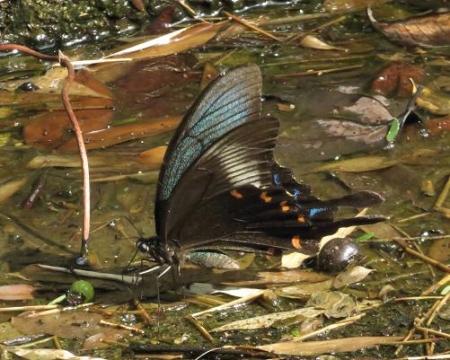 蝶の死骸あり 168