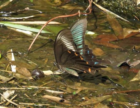蝶の死骸あり 163