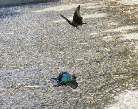 蝶の死骸あり 206
