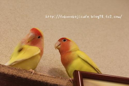 スモモ&こちび1