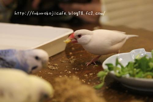 撮影12 ぎんちゃんコーン