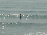 susuki surfing