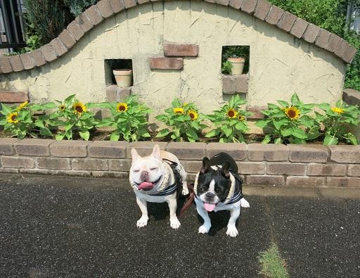 7-30花壇前ふるうた