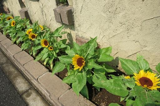 7-30花壇