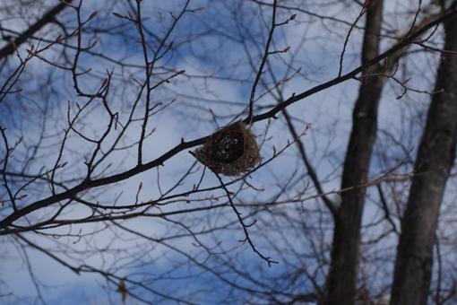 エナガの巣でしょうか?