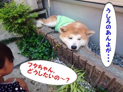 b_20150530_5.jpg