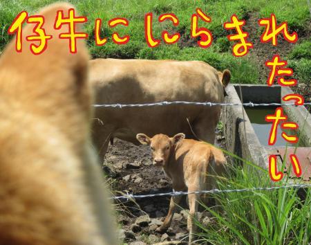 5_convert_20150724215005.jpg