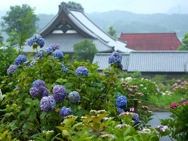 紫陽花の庭02