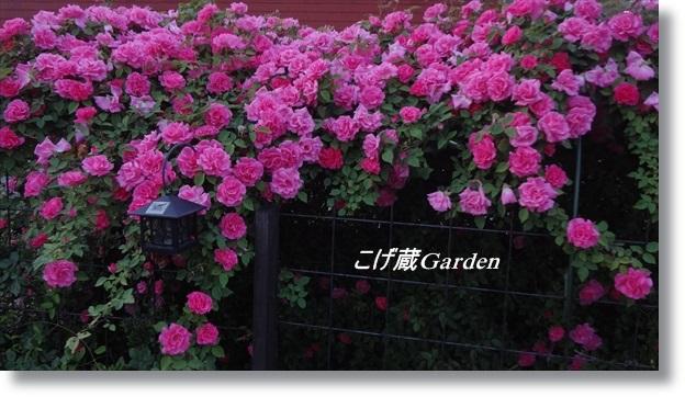 DSC04975_R.jpg