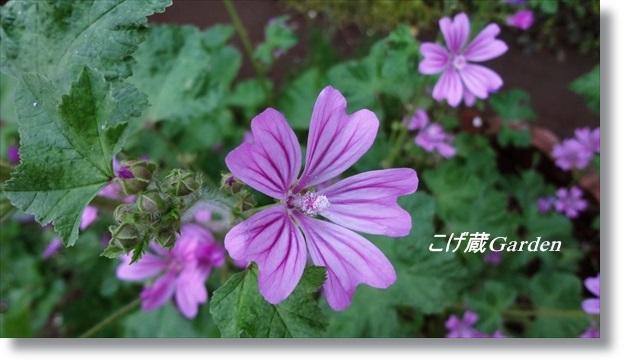 DSC06215_R.jpg