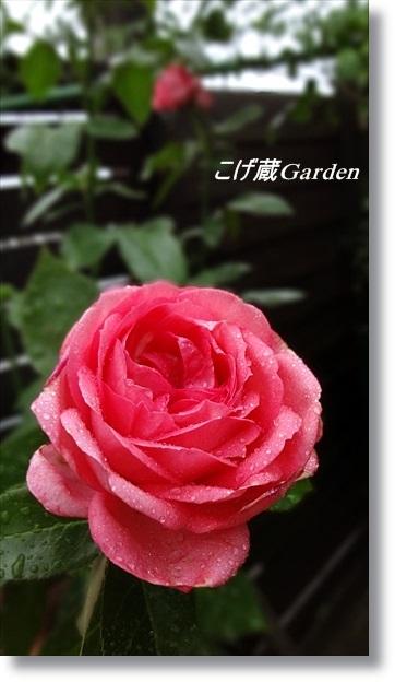 DSC06573_R.jpg