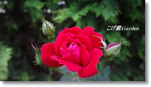 DSC06911_R.jpg