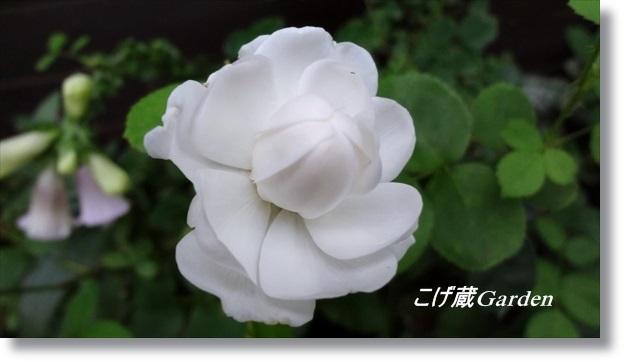 DSC07460_R.jpg