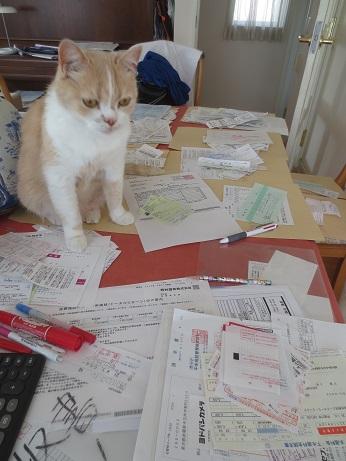 決算ネコのぼる2