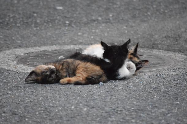 猫13,14,15