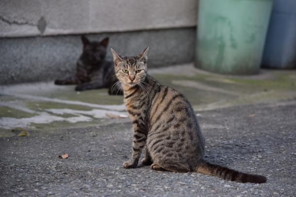 猫28,32