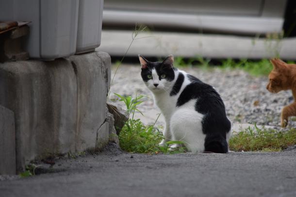 猫22、23