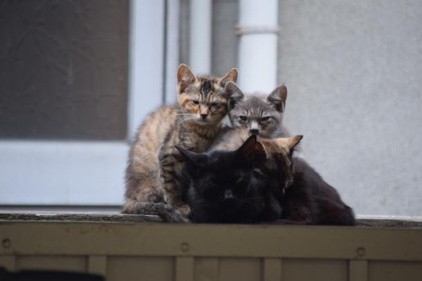 猫13,14,15,16