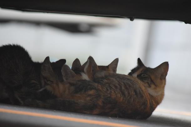 猫9,10,11,12,13