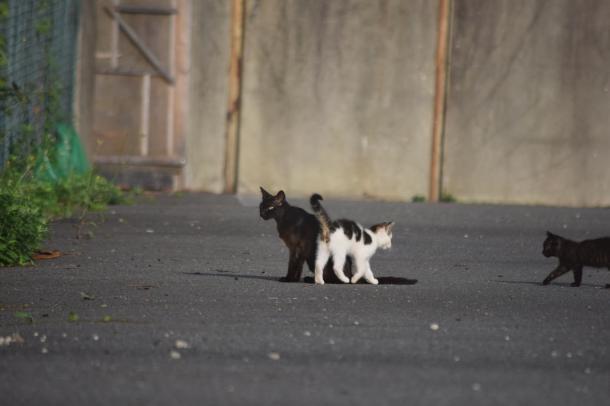 猫24,25,26