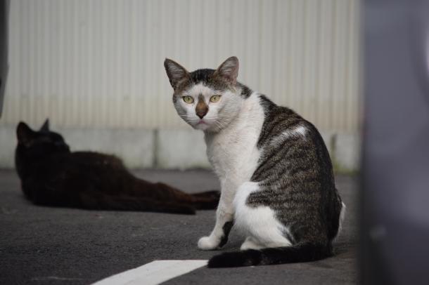 猫44,45