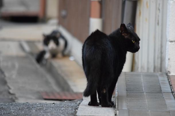 猫6,11