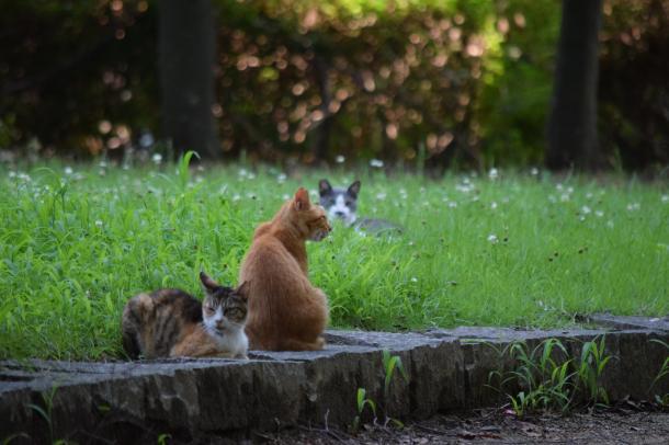 猫19,20,21
