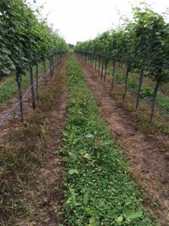 2015 07 18 高畠ワイン -3