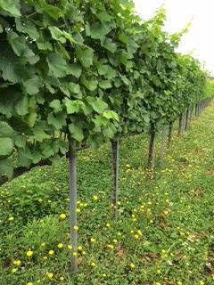 2015 07 18 高畠ワイン -4
