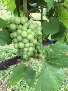 2015 07 18 高畠ワイン -5