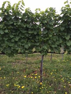 2015 07 18 高畠ワイン -6