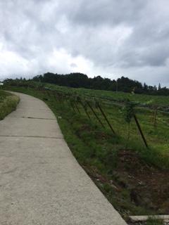 2015 07 17 朝日町ワイン-2