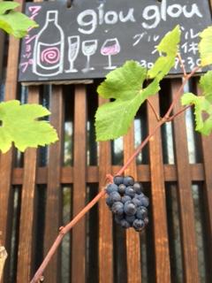 2015 07 29 葡萄の木