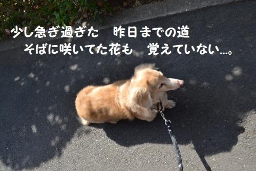 5_201508032113555cd.jpg
