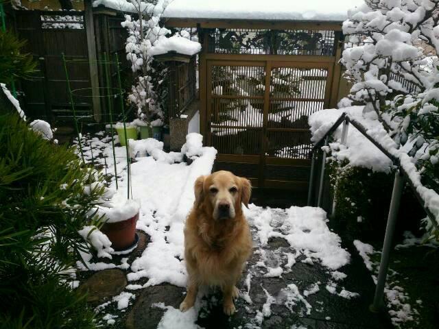 20150102大雪