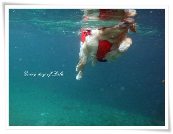 水中からの泳ぐ姿1201508
