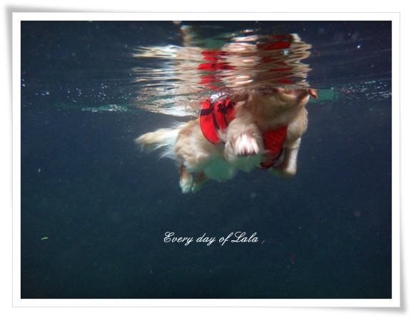 水中からの泳ぐ姿2201508