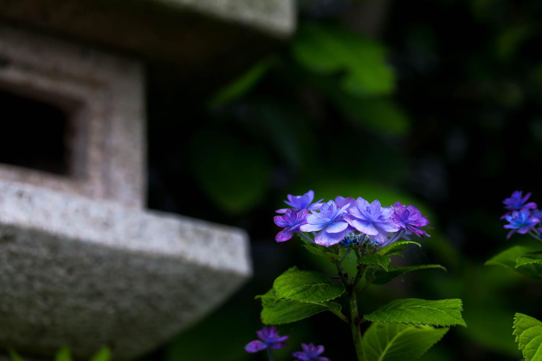 _MG_0469.jpg